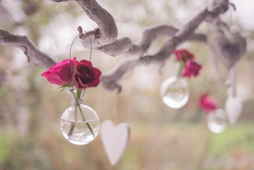 Rose on dry stem